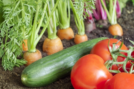 Many fresh organic vegetables growing in the garden closeup photo