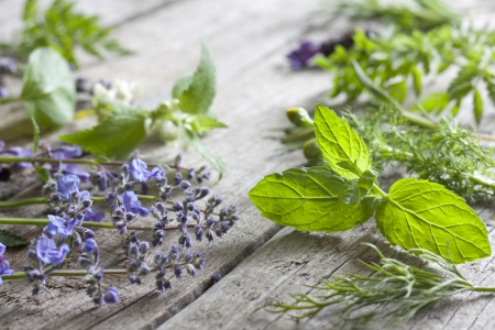 nettle: Fresh herbs on vintage boards aromatherapy background concept