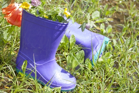 wellingtons: Wellingtons in spring rainy day on green grass