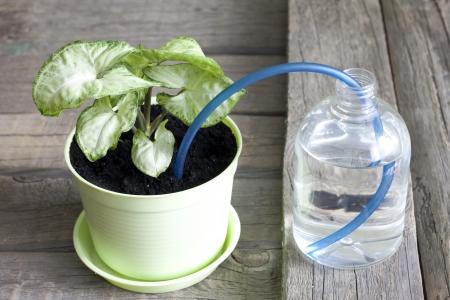 arroser plantes: Invention de l'arrosage des plantes concept cr�atif de protection Banque d'images