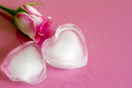 Ice heart on pink abstract valentine love background with rose Stock Photo - 24756291