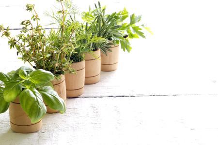 Variety of fresh herbs on white boards Standard-Bild