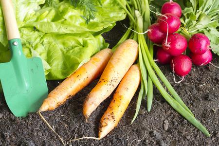 新鮮な春庭の土壌に有機野菜 写真素材