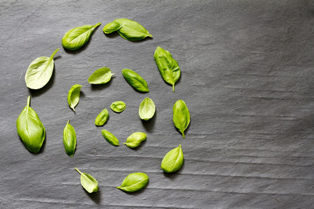 abstract food: Basil leaves on stone abstract food background concept