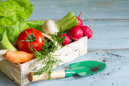Spring vegetables and gardening tools on floor