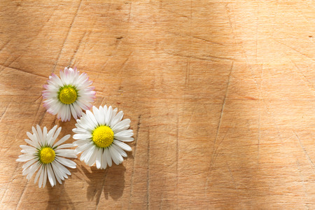 sunshine background: Spring daisy on vintage wooden retro background