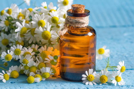 Oil of chamomile with the fresh flowers closeup