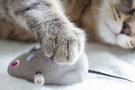 Sleepy cat and mouse toy on white towel