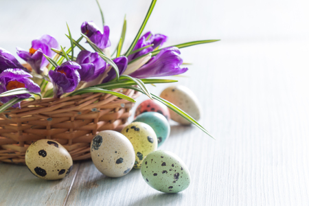 Colorful painted Easter eggs and spring crocus Stock Photo