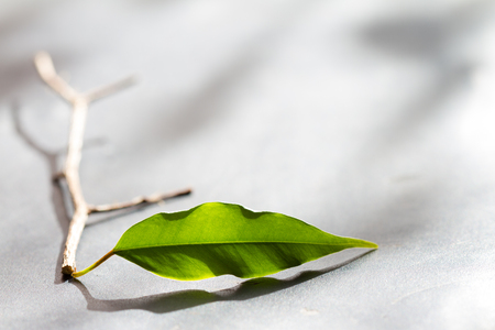 Business metaphor team start up concept with leaves