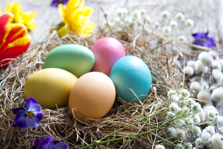 Easter colorful eggs in the nest with flowers on vintage wooden boards and empty space