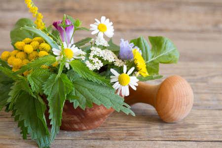 Fresh herbs in the mortar Standard-Bild