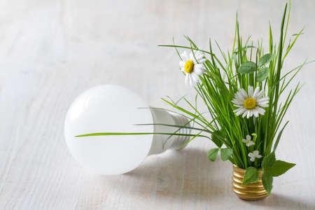 Energy saving concept, plants growing out of light bulb Standard-Bild