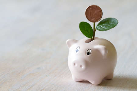 Pig piggy bank with green plant, concept increase in savings Standard-Bild