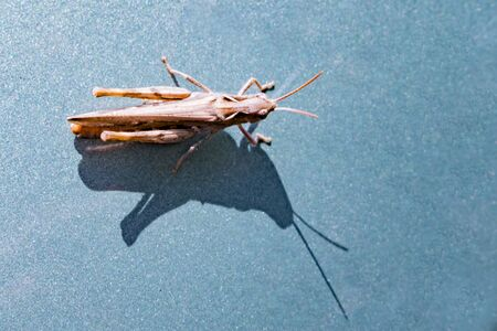 Photo insect grasshopper on a colored background