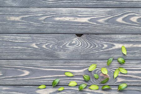 Still life from leaves of an ornamental plant on a woody background Archivio Fotografico