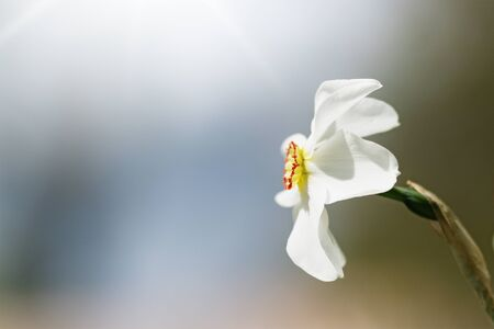 Summer white flowers in the garden near the house