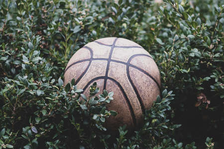 An old battered basketball on the background of a green Bush