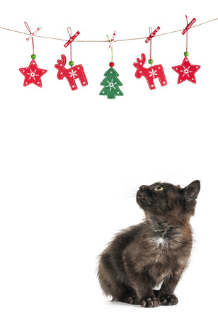 little kitty cat christmas decorations white background stock photo 24984391
