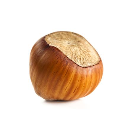 hazelnut macro isolated on white background Standard-Bild