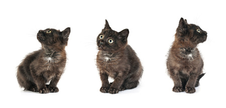 three small kitten positions on white background - collection Stock Photo - 25994660