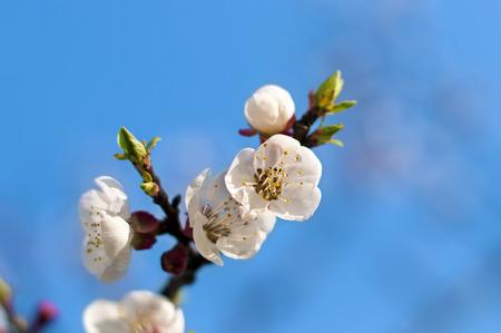 prune: prune flowers  branch