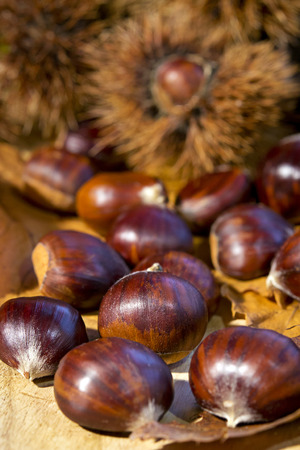 Chestnuts curly on wood background macro photo