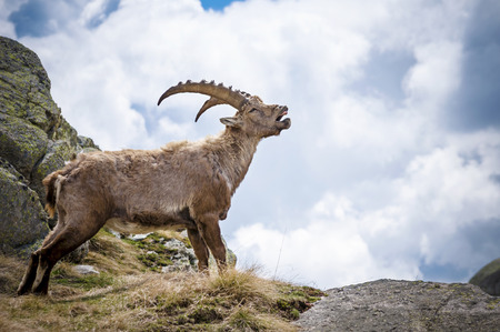 people  camera: One Person, Sunlight, Men, Park, Scenics, Looking At View, Rock, Life, European Alps, High Up, Blue, Ibex, Mountain Peak, Animals In The Wild, Sunbeam, Cloud, Italy, Mountain Range, Young Animal, Goose Meat, Hiking, Travel, Valley, Summer, People, Camera,