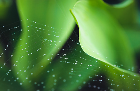 raindrops on web photo