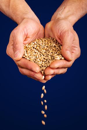 wheat dropping from farmer's hand Standard-Bild