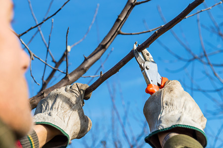 Pruning tree brunch with pruning shears