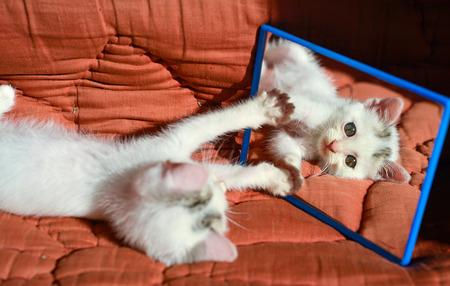 kitten at the mirror Stock Photo