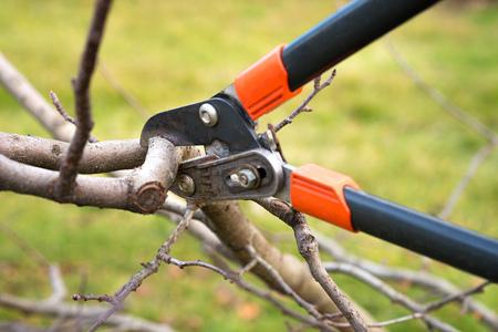 jardinero poda de árboles frutales con tijeras de podar