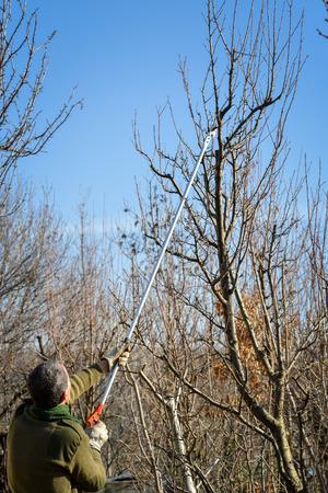 LongReach light extended length pruner, gardening tools Stock Photo