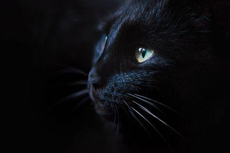 Close up portrait of a beautiful black cat with green eyes 版權商用圖片