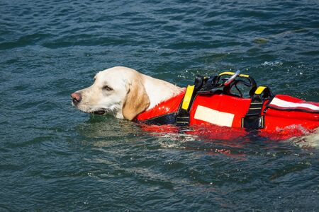 Lifeguard dog, rescue demonstration with the dogs in the water Stock Photo