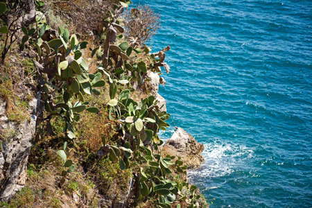 Prickly pear on a rock against the backdrop of a bright blue sea on a sunny day