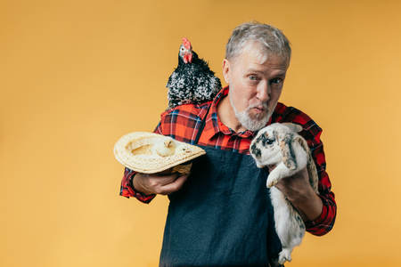 grey-haired farmer is going to kiss a rabbit. studio sshot. isolated orange background. feeling Banque d'images