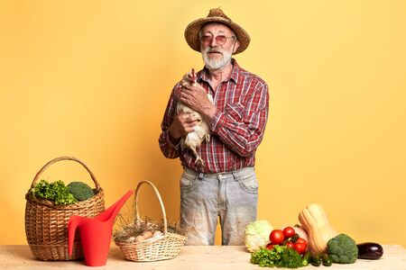 Front view of mature gardener with gray beard, standing with domestic hen behind counter with fresh lush vegetables and eggs on it, gazing directly in camera. Studio shot.