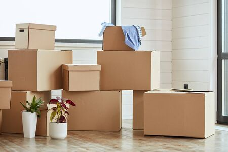 Twelve carton boxes with household stuff in light living room on moving day. Two flowers in pots on left side Foto de archivo
