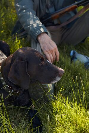 Attentive black hunter dog lying on grass while his owner have rest during hunting
