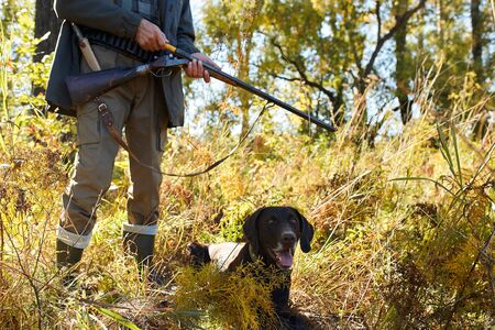 AWatchful hunter dog look for trophy, man stand behind him. In forest