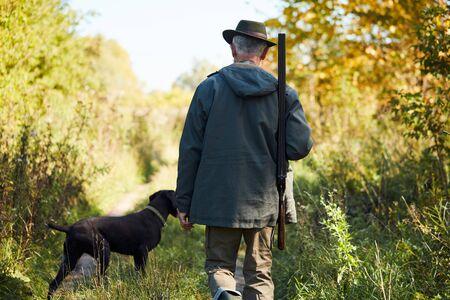 Hound labrador hunt on animals in forest. Caucasian senior man with gun next to dog