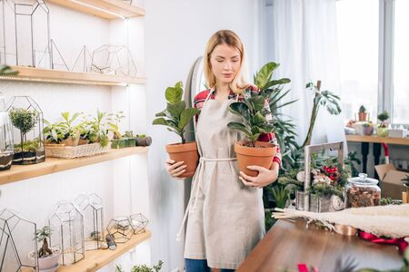 charming lady, young woman florist in apron moving pots with flowers from one place to another, making transposition in her own flowers retail shop