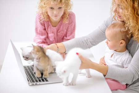 Woman and daughter playing with kitten background.