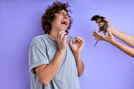 screaming and crying curly male is afraid of rodents, has musophobia, panic after seeing exotic animals Archivio Fotografico