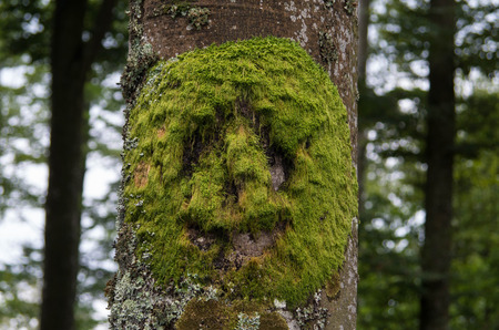 face in tree bark: bears face from moss