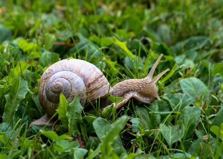 mucus: snail in the grass