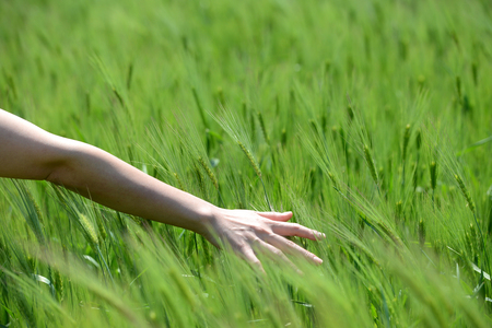 hand in a wheat field therapy Stock Photo