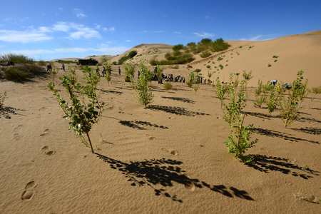 people who Planting trees in the desert Banco de Imagens - 87540131